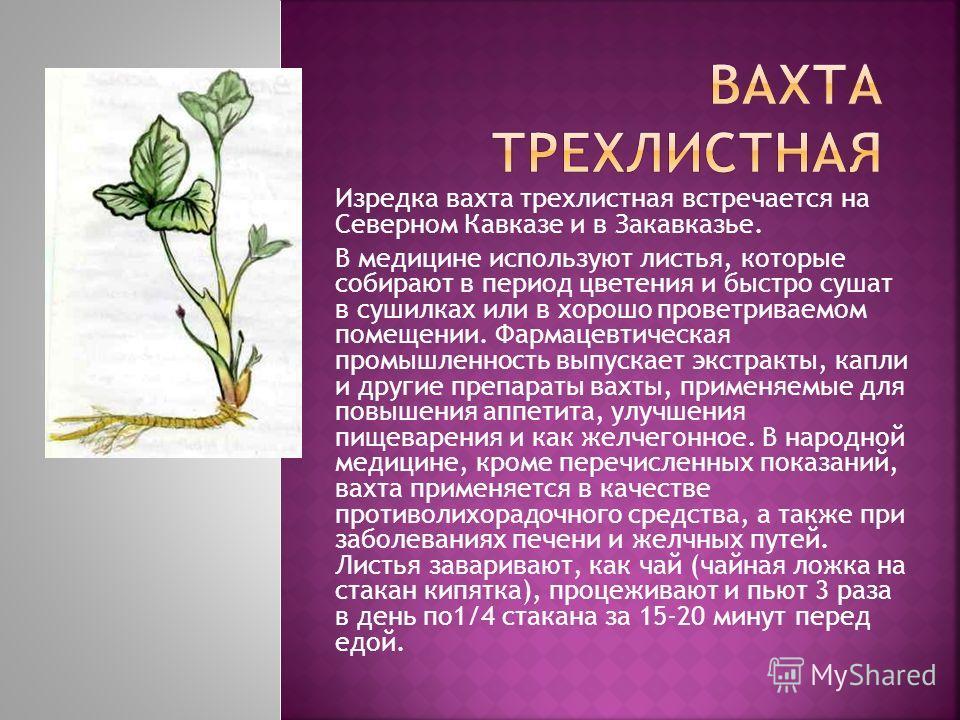 Изредка вахта трехлистная встречается на Северном Кавказе и в Закавказье. В медицине используют листья, которые собирают в период цветения и быстро сушат в сушилках или в хорошо проветриваемом помещении. Фармацевтическая промышленность выпускает экст