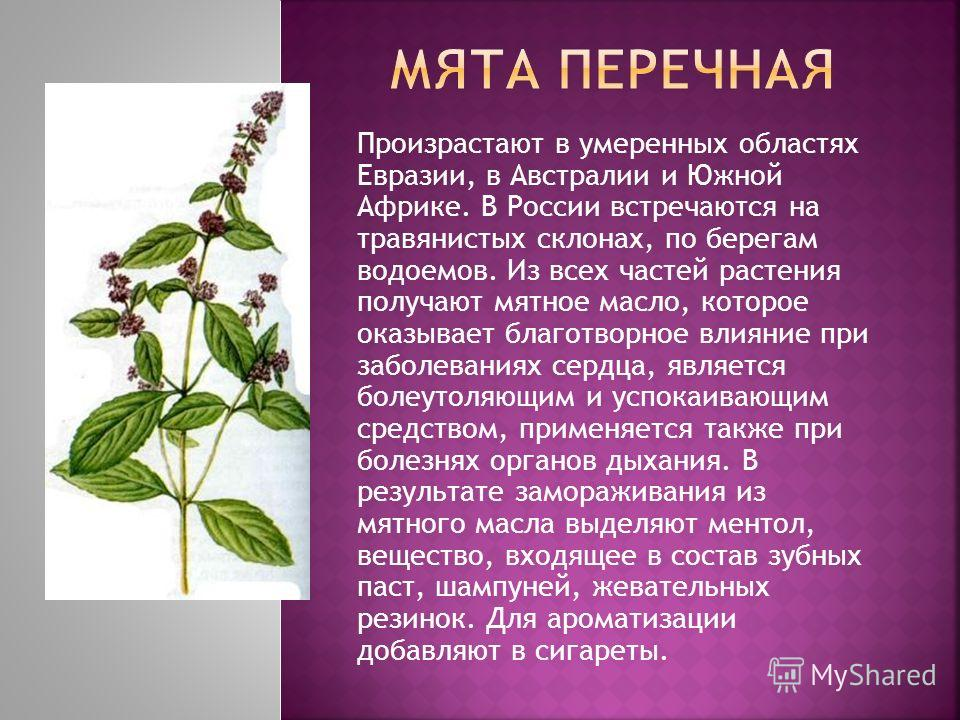 Произрастают в умеренных областях Евразии, в Австралии и Южной Африке. В России встречаются на травянистых склонах, по берегам водоемов. Из всех частей растения получают мятное масло, которое оказывает благотворное влияние при заболеваниях сердца, яв