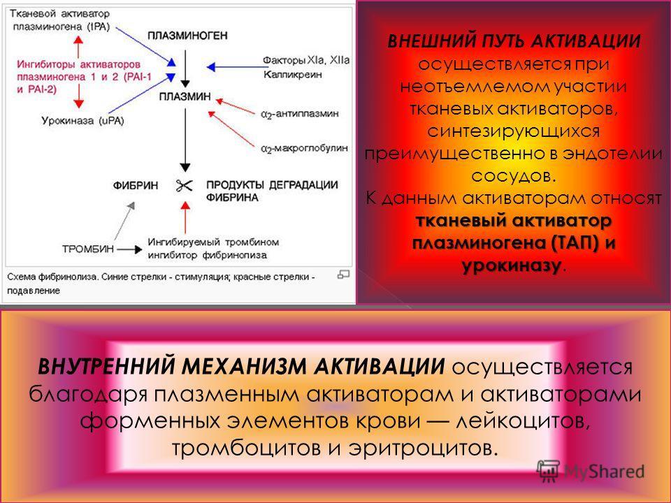 ВНЕШНИЙ ПУТЬ АКТИВАЦИИ осуществляется при неотъемлемом участии тканевых активаторов, синтезирующихся преимущественно в эндотелии сосудов. тканевый активатор плазминогена (ТАП) и урокиназу К данным активаторам относят тканевый активатор плазминогена (