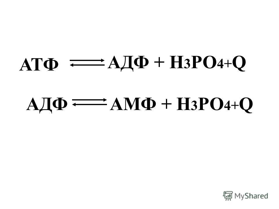 АДФ + Н 3 РО 4+ Q АМФ + Н 3 РО 4+ Q АТФ АДФ