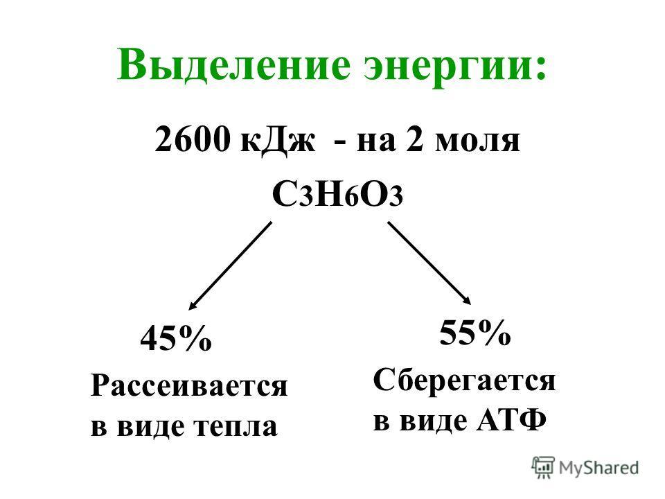 Выделение энергии: 2600 кДж - на 2 моля С3Н6О3С3Н6О3 45% Рассеивается в виде тепла Сберегается в виде АТФ 55%