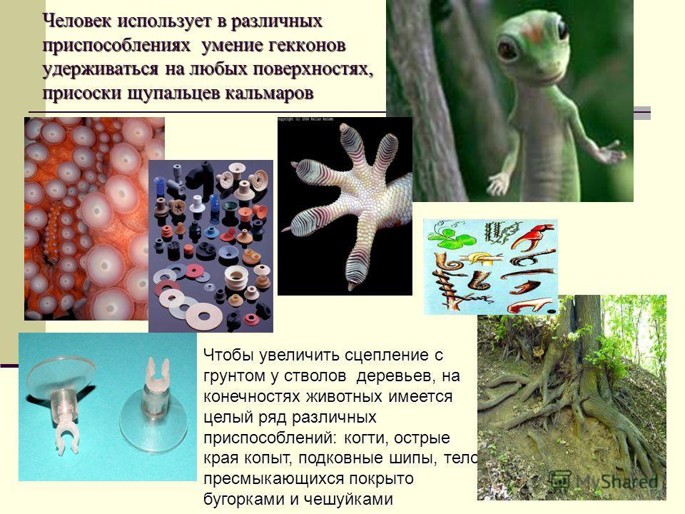 Человек использует в различных приспособлениях умение гекконов удерживаться на любых поверхностях, присоски щупальцев кальмаров Чтобы увеличить сцепление с грунтом у стволов деревьев, на конечностях животных имеется целый ряд различных приспособлений