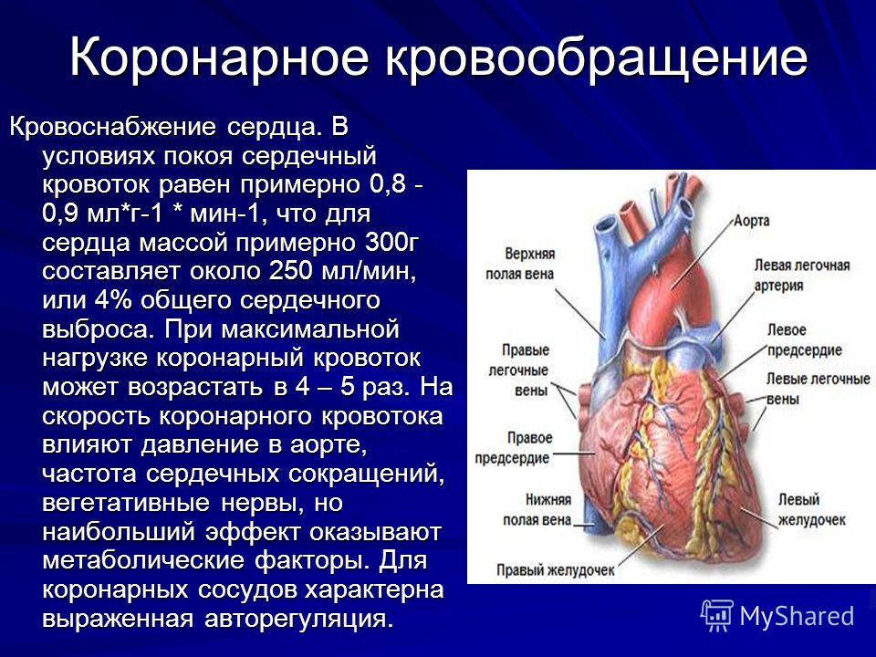 Коронарное кровообращение Кровоснабжение сердца. В условиях покоя сердечный кровоток равен примерно 0,8 - 0,9 мл*г-1 * мин-1, что для сердца массой примерно 300г составляет около 250 мл/мин, или 4% общего сердечного выброса. При максимальной нагрузке
