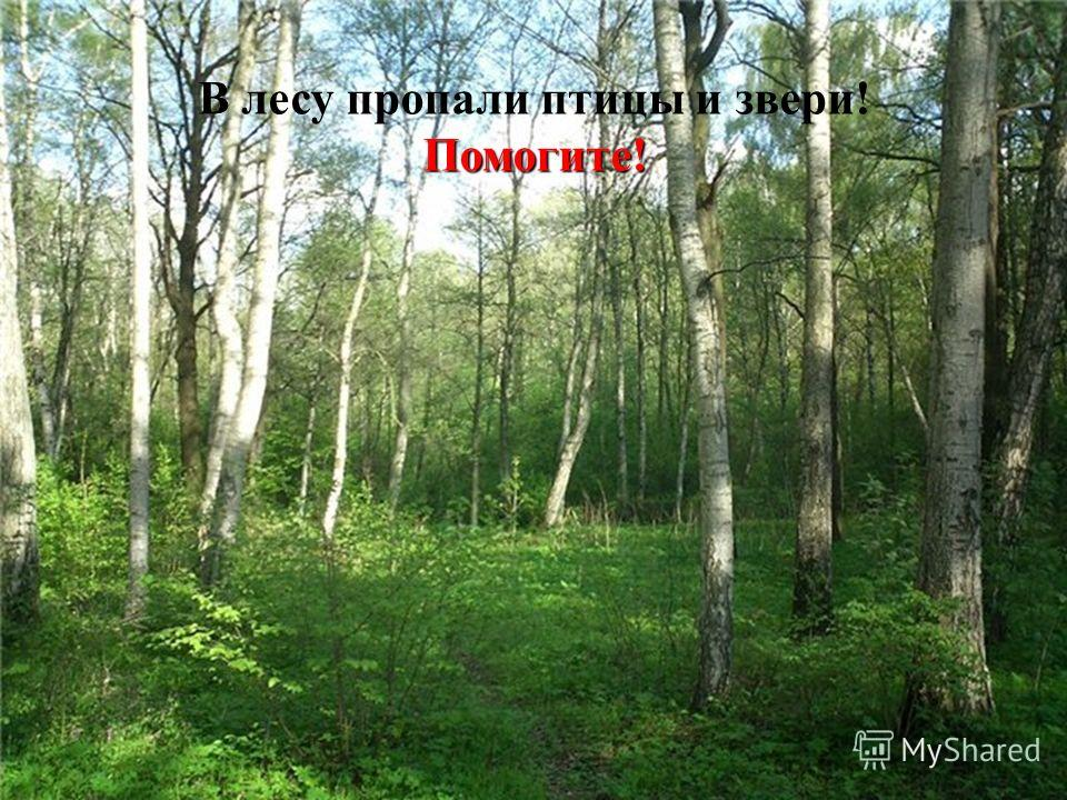 Помогите! В лесу пропали птицы и звери! Помогите!