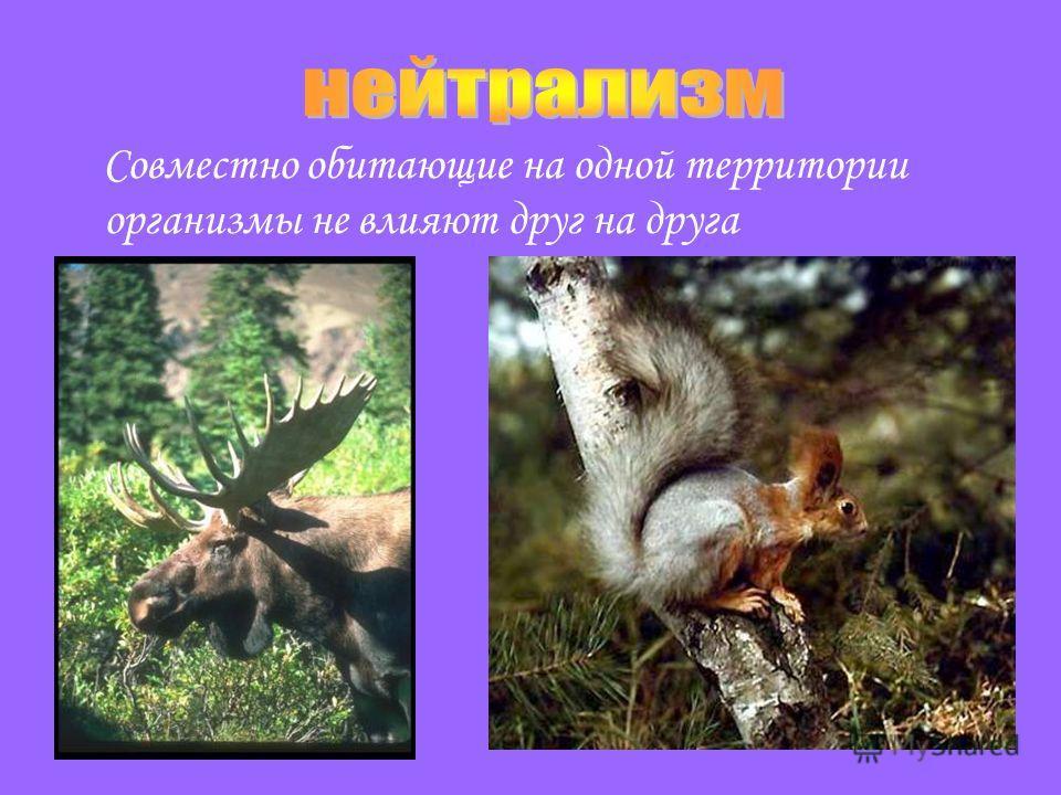 Совместно обитающие на одной территории организмы не влияют друг на друга