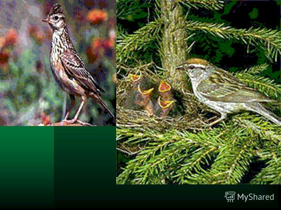 Птицы Наиболее многочисленны птицы, число видов которых составляет около 64. Птиц в степи много: жаворонки полевой и степной, чекан луговой, овсянка садовая, славка серая и др. Большинство птиц прилетают в степь весной и летом в поисках корма: скворц