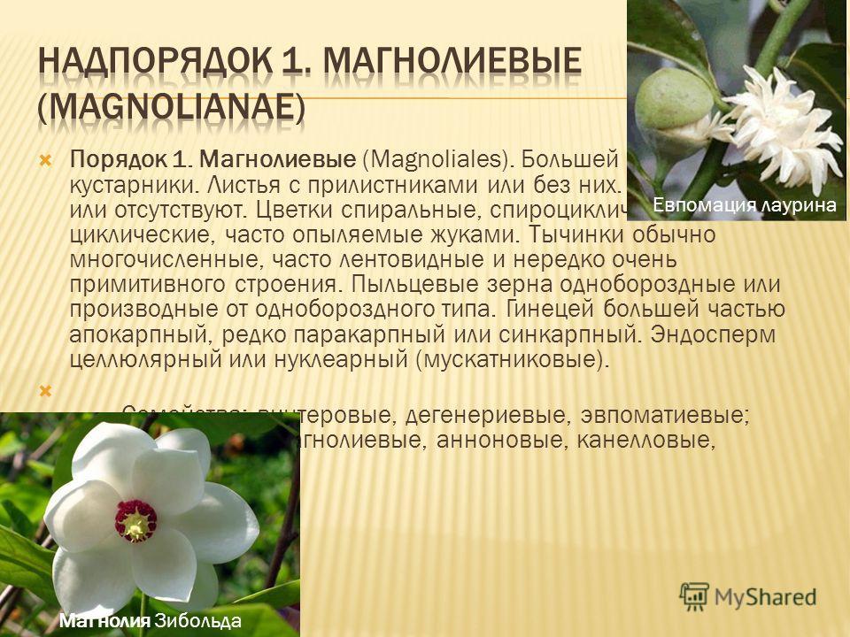 Порядок 1. Магнолиевые (Magnoliales). Большей частью деревья и кустарники. Листья с прилистниками или без них. Сосуды имеются или отсутствуют. Цветки спиральные, спироциклические или циклические, часто опыляемые жуками. Тычинки обычно многочисленные,