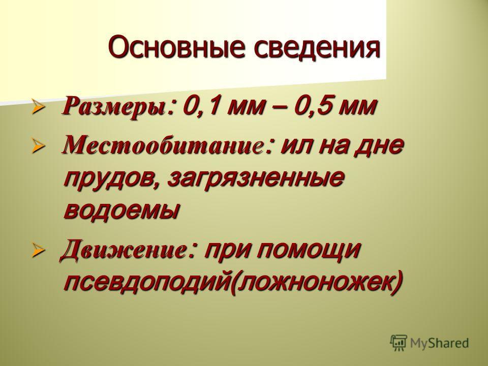Основные сведения Размеры : 0,1 мм – 0,5 мм Размеры : 0,1 мм – 0,5 мм Местообитание : ил на дне прудов, загрязненные водоемы Местообитание : ил на дне прудов, загрязненные водоемы Движение : при помощи псевдоподий(ложноножек) Движение : при помощи пс