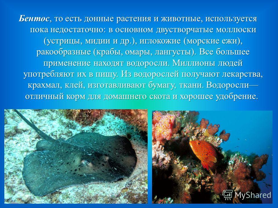 Бентос, то есть донные растения и животные, используется пока недостаточно: в основном двустворчатые моллюски (устрицы, мидии и др.), иглокожие (морские ежи), ракообразные (крабы, омары, лангусты). Все большее применение находят водоросли. Миллионы л