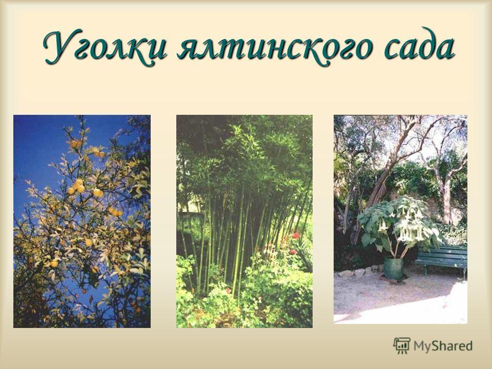 Уголки ялтинского сада
