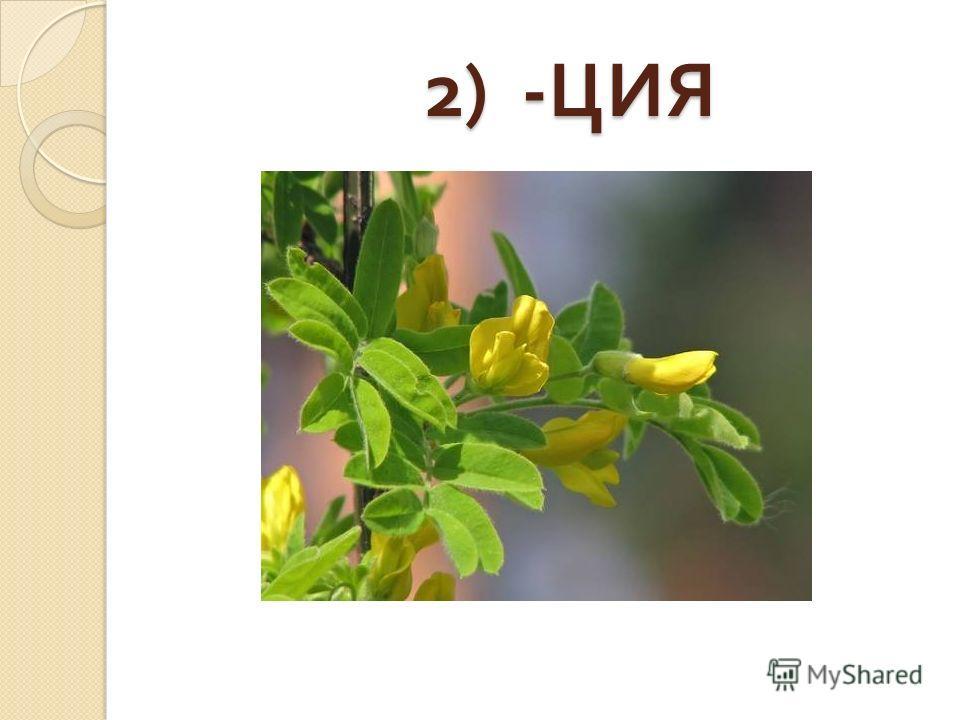 2) - ЦИЯ 2) - ЦИЯ