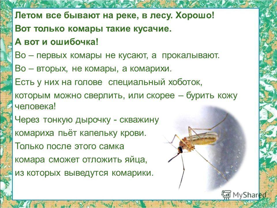 Летом все бывают на реке, в лесу. Хорошо! Вот только комары такие кусачие. А вот и ошибочка! Во – первых комары не кусают, а прокалывают. Во – вторых, не комары, а комарихи. Есть у них на голове специальный хоботок, которым можно сверлить, или скорее
