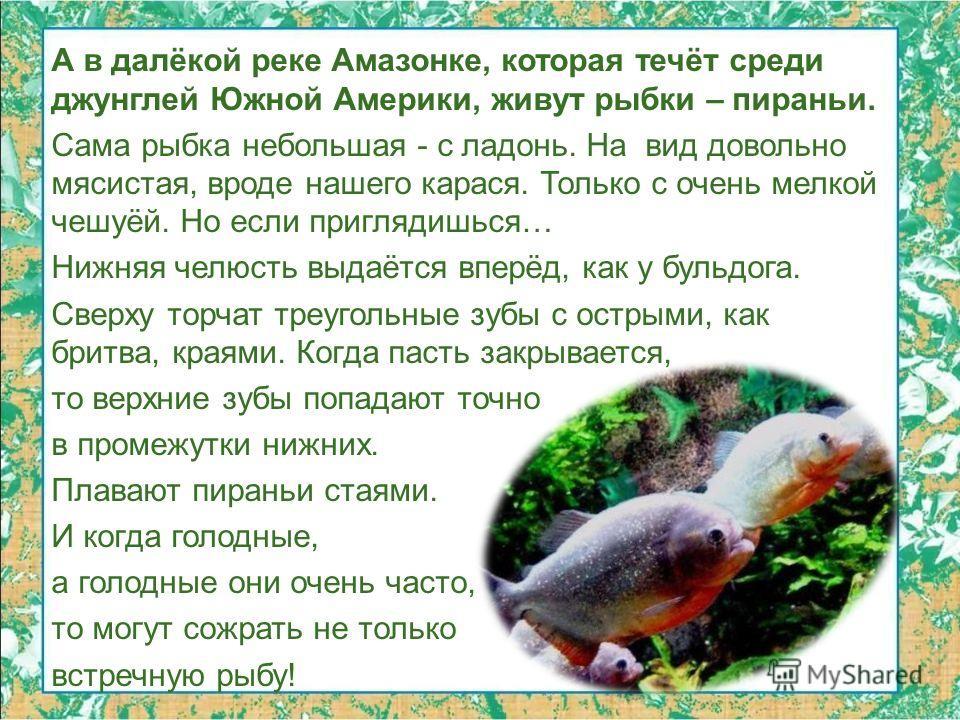 А в далёкой реке Амазонке, которая течёт среди джунглей Южной Америки, живут рыбки – пираньи. Сама рыбка небольшая - с ладонь. На вид довольно мясистая, вроде нашего карася. Только с очень мелкой чешуёй. Но если приглядишься… Нижняя челюсть выдаётся