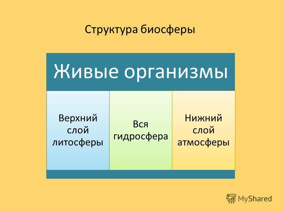 Живые организмы Верхний слой литосферы Вся гидросфера Нижний слой атмосферы Структура биосферы