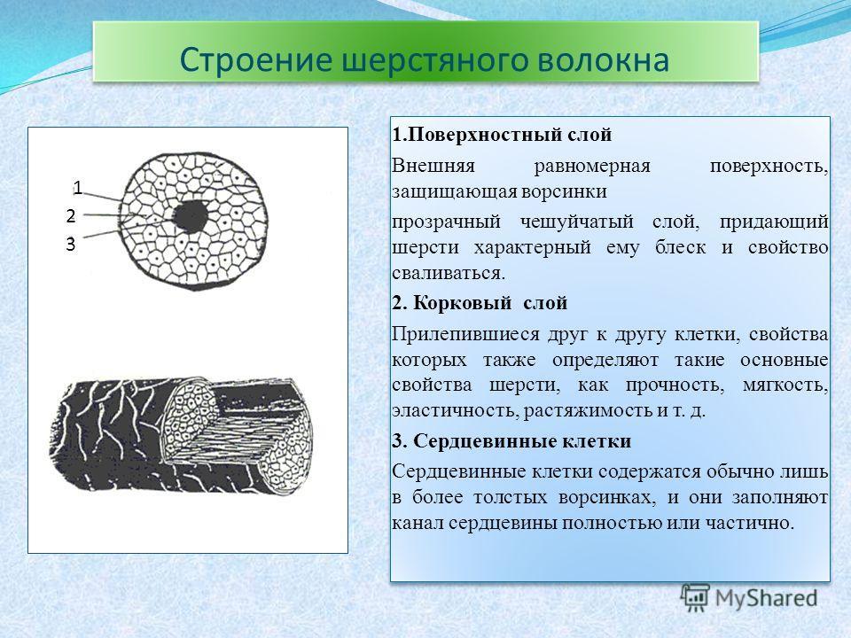 Строение шерстяного волокна 1.Поверхностный слой Внешняя равномерная поверхность, защищающая ворсинки прозрачный чешуйчатый слой, придающий шерсти характерный ему блеск и свойство сваливаться. 2. Корковый слой Прилепившиеся друг к другу клетки, свойс