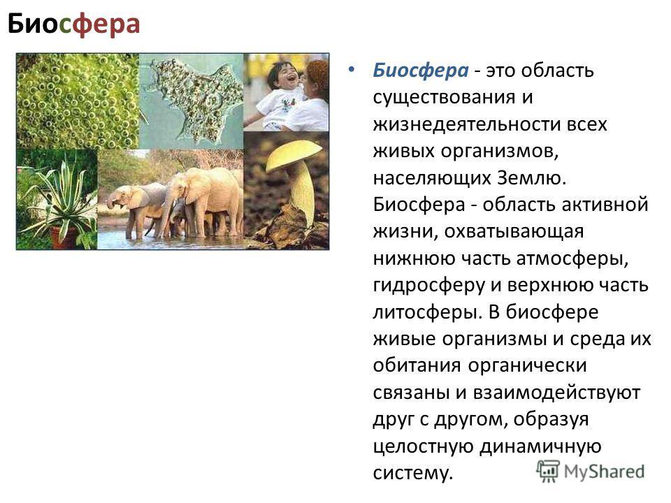 Биосфера Биосфера - это область существования и жизнедеятельности всех живых организмов, населяющих Землю. Биосфера - область активной жизни, охватывающая нижнюю часть атмосферы, гидросферу и верхнюю часть литосферы. В биосфере живые организмы и сред