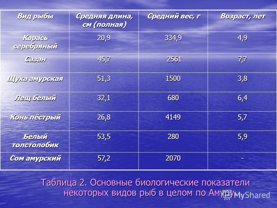 Таблица 2. Основные биологические показатели некоторых видов рыб в целом по Амуру. Вид рыбы Средняя длина, см (полная) Средний вес, г Возраст, лет Карась серебряный 20,9334,94,9 Сазан45,7 2561 25617,7 Щука амурская 51,315003,8 Лещ белый 32,16806,4 Ко