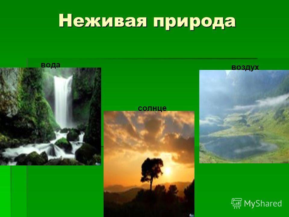 Неживая природа солнце вода воздух