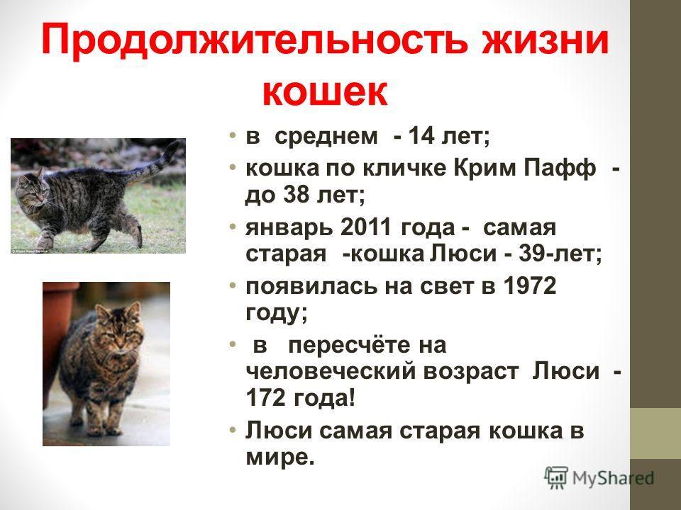 Продолжительность жизни кошек в среднем - 14 лет; кошка по кличке Крим Пафф - до 38 лет; январь 2011 года - самая старая -кошка Люси - 39-лет; появилась на свет в 1972 году; в пересчёте на человеческий возраст Люси - 172 года! Люси самая старая кошка