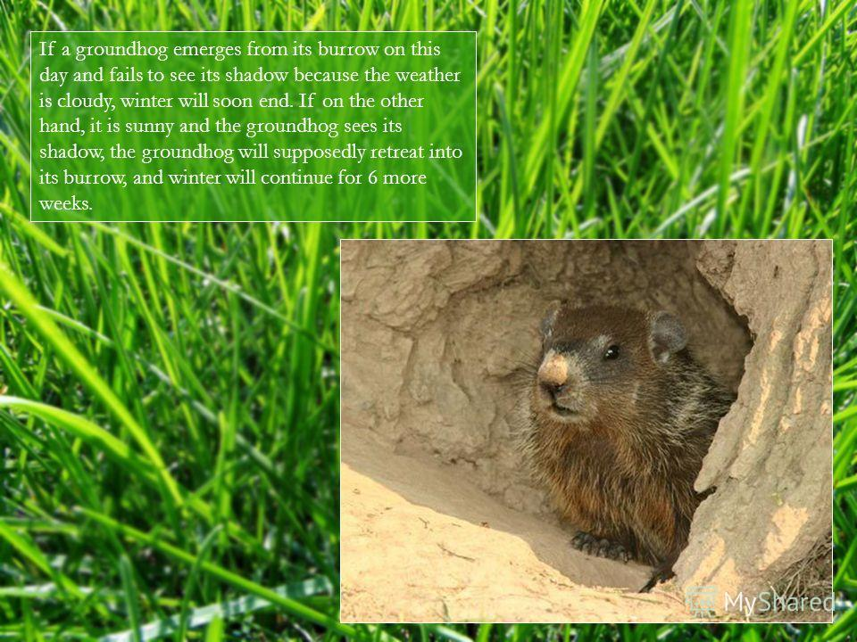 If a groundhog emerges from its burrow on this day and fails to see its shadow because the weather is cloudy, winter will soon end. If on the other hand, it is sunny and the groundhog sees its shadow, the groundhog will supposedly retreat into its bu