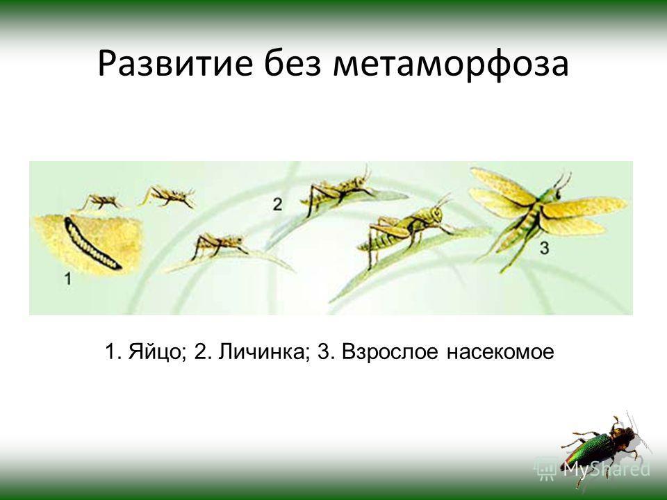 Отряд Прямокрылые 1.Зелёный кузнечик; 2.Домовой сверчок; 3.Акрида обыкновенная; 4.Кобылка трескучая.