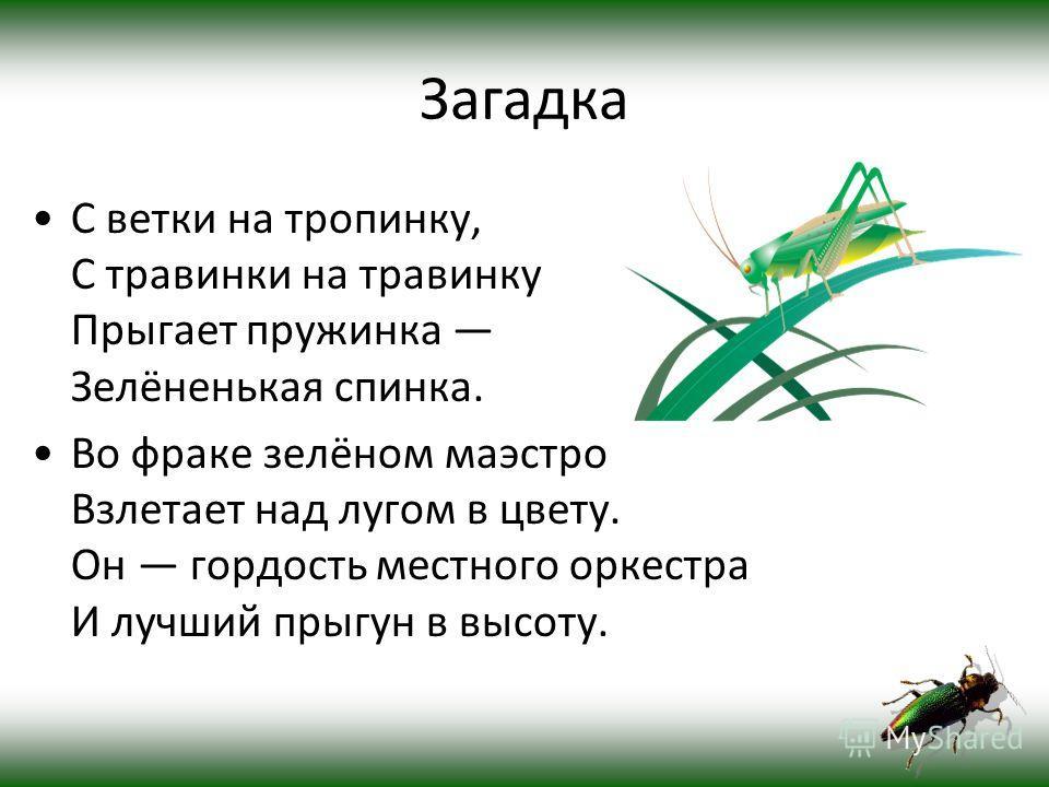 Корней Чуковский написал стихотворение «Тараканище» (1923); В 12 серии «Секретных материалов» третьего сезона присутствуют тараканы-убийцы. Польскую танкетку TKS противник (немцы) называли «тараканом».