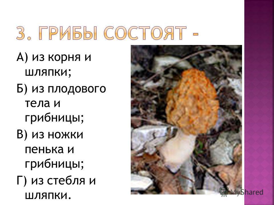 А) из корня и шляпки; Б) из плодового тела и грибницы; В) из ножки пенька и грибницы; Г) из стебля и шляпки.