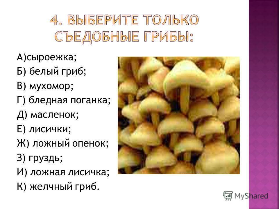 А)сыроежка; Б) белый гриб; В) мухомор; Г) бледная поганка; Д) масленок; Е) лисички; Ж) ложный опенок; З) груздь; И) ложная лисичка; К) желчный гриб.