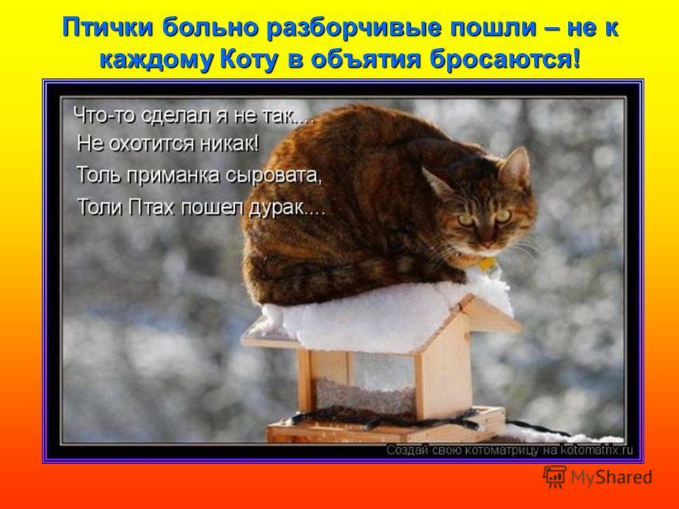 Птички больно разборчивые пошли – не к каждому Коту в объятия бросаются!