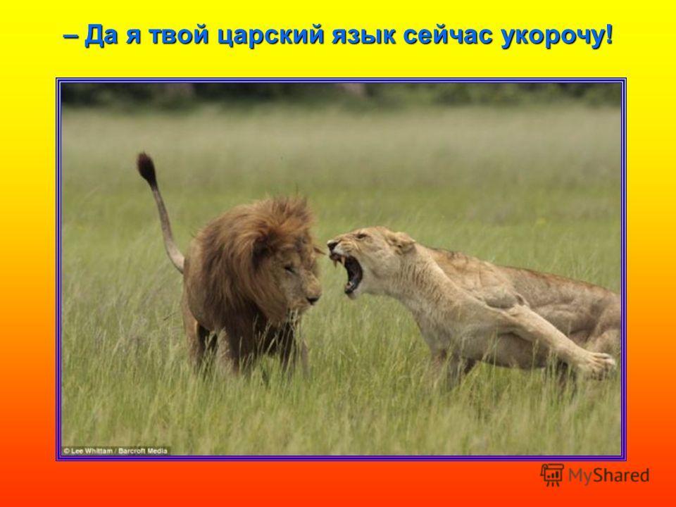 – Да я твой царский язык сейчас укорочу!