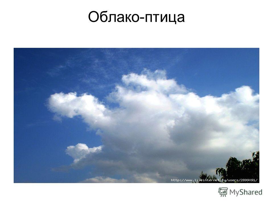 Облако-птица