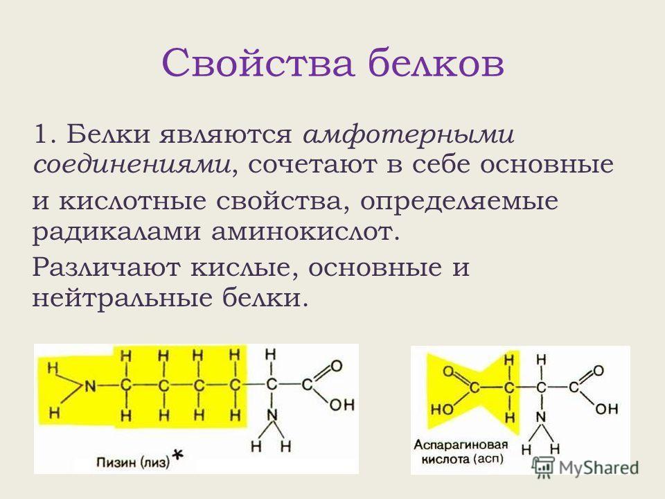 Свойства белков 1. Белки являются амфотерными соединениями, сочетают в себе основные и кислотные свойства, определяемые радикалами аминокислот. Различают кислые, основные и нейтральные белки.