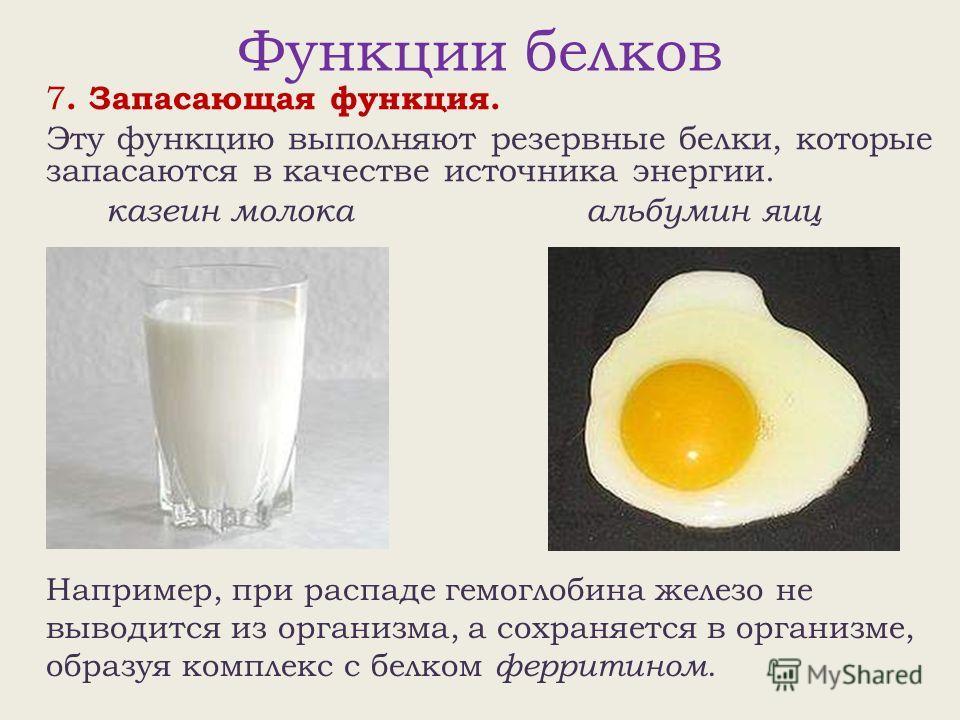 Функции белков 7. Запасающая функция. Эту функцию выполняют резервные белки, которые запасаются в качестве источника энергии. казеин молока альбумин яиц Например, при распаде гемоглобина железо не выводится из организма, а сохраняется в организме, об