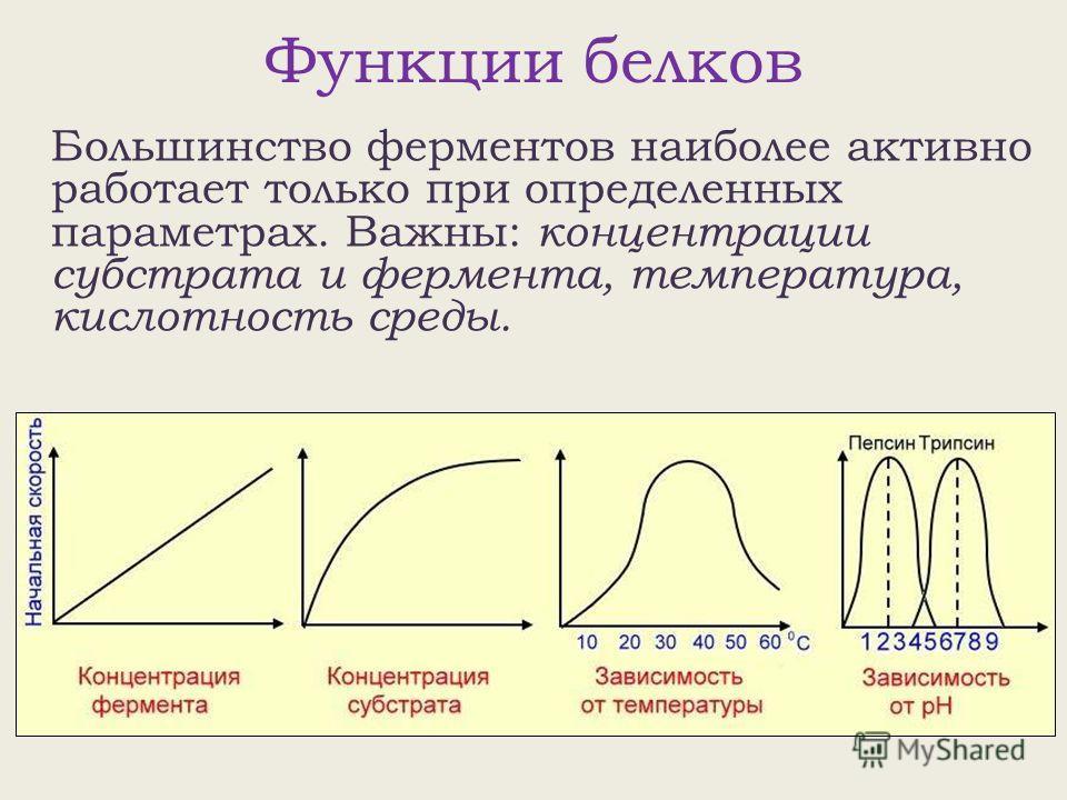 Функции белков Большинство ферментов наиболее активно работает только при определенных параметрах. Важны: концентрации субстрата и фермента, температура, кислотность среды.