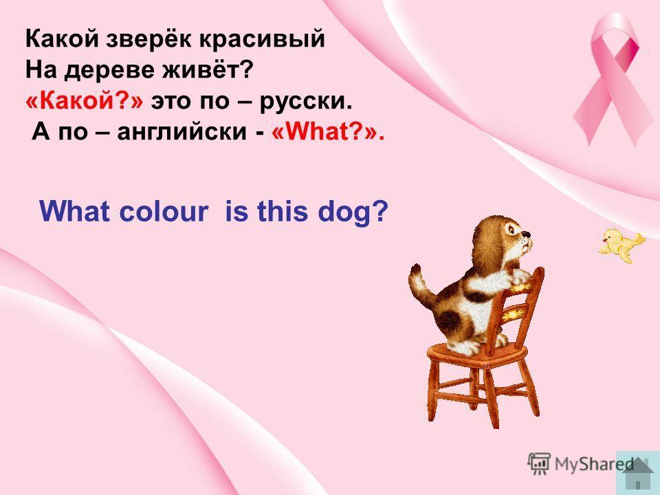 Какой зверёк красивый На дереве живёт? «Какой?» это по – русски. А по – английски - «What?». What colour is this dog?