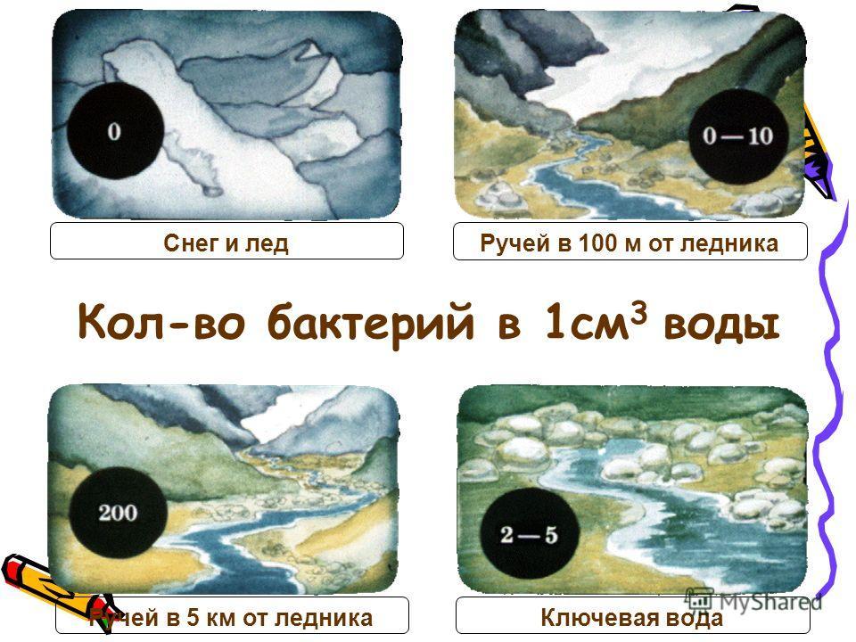 Кол-во бактерий в 1см 3 воды Снег и лед Ручей в 100 м от ледника Ручей в 5 км от ледника Ключевая вода