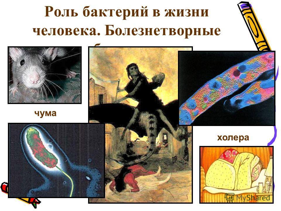 Роль бактерий в жизни человека. Болезнетворные бактерии чума холера