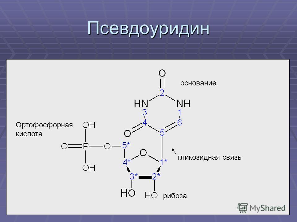 Псевдоуридин рибоза Ортофосфорная кислота основание гликозидная связь