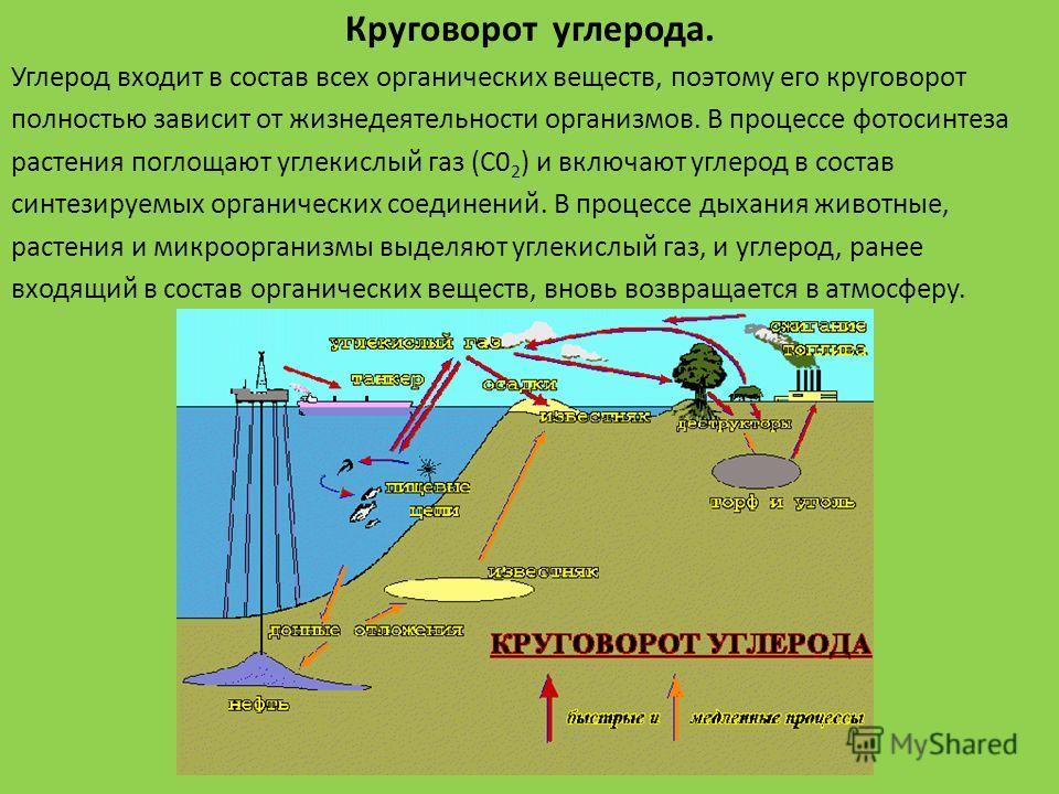 Круговорот углерода. Углерод входит в состав всех органических веществ, поэтому его круговорот полностью зависит от жизнедеятельности организмов. В процессе фотосинтеза растения поглощают углекислый газ (С0 2 ) и включают углерод в состав синтезируе