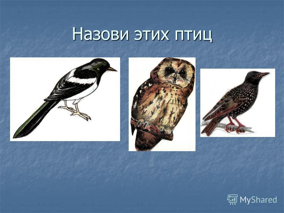 Назови этих птиц