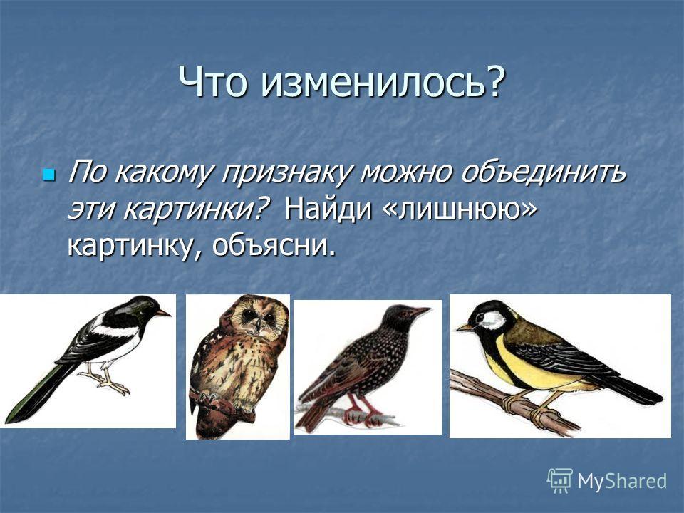 Что изменилось? По какому признаку можно объединить эти картинки? Найди «лишнюю» картинку, объясни. По какому признаку можно объединить эти картинки? Найди «лишнюю» картинку, объясни.