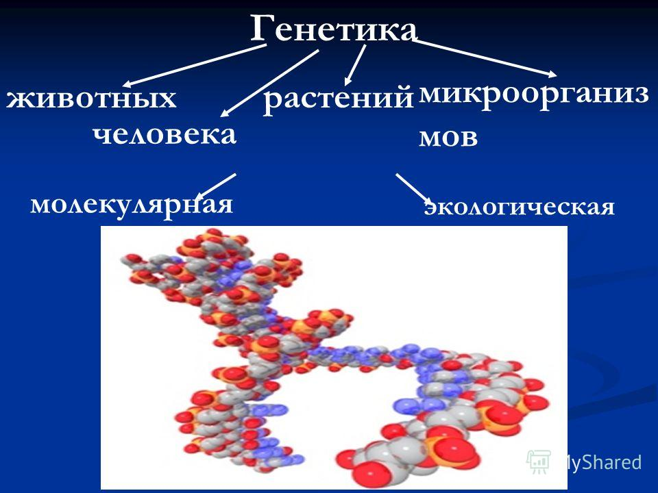 Генетика животных человека растений микроорганиз мов молекулярная экологическая