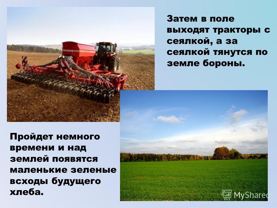 Затем в поле выходят тракторы с сеялкой, а за сеялкой тянутся по земле бороны. Пройдет немного времени и над землей появятся маленькие зеленые всходы будущего хлеба.