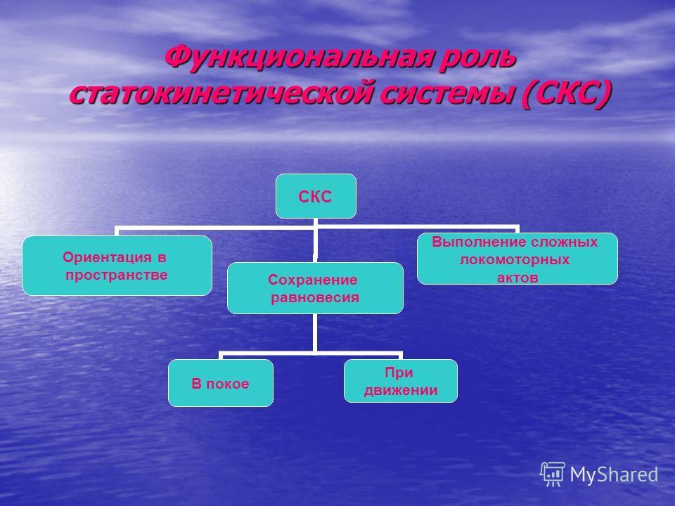 Функциональная роль статокинетической системы (СКС) СКС Ориентация в пространстве Сохранение равновесия В покое При движении Выполнение сложных локомоторных актов