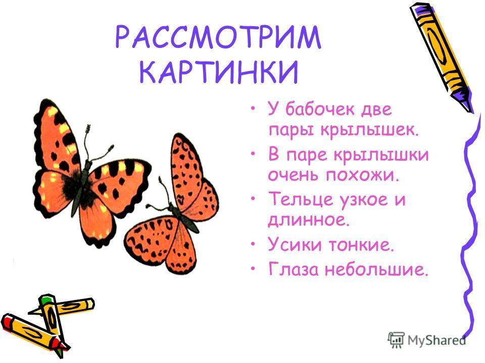 РАССМОТРИМ КАРТИНКИ У бабочек две пары крылышек. В паре крылышки очень похожи. Тельце узкое и длинное. Усики тонкие. Глаза небольшие.
