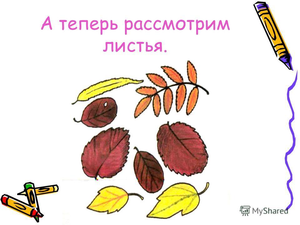 А теперь рассмотрим листья.