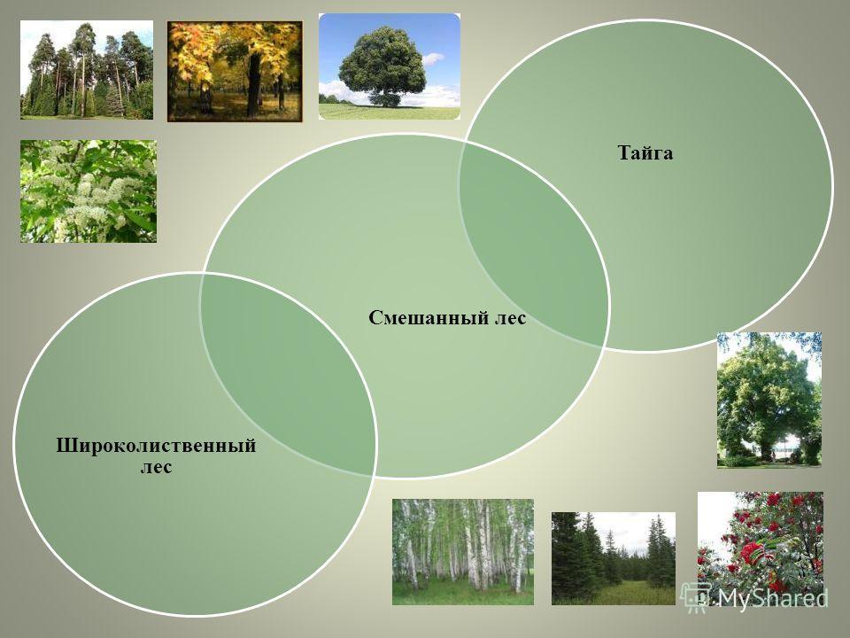 Тайга Смешанный лес Широколиственный лес