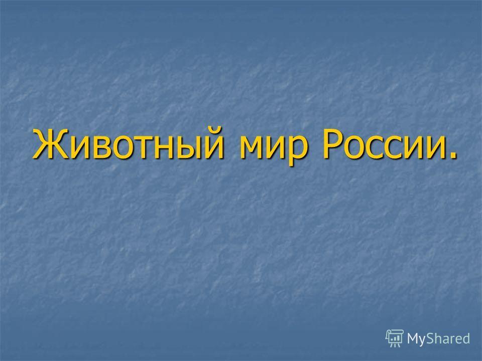 Животный мир России.