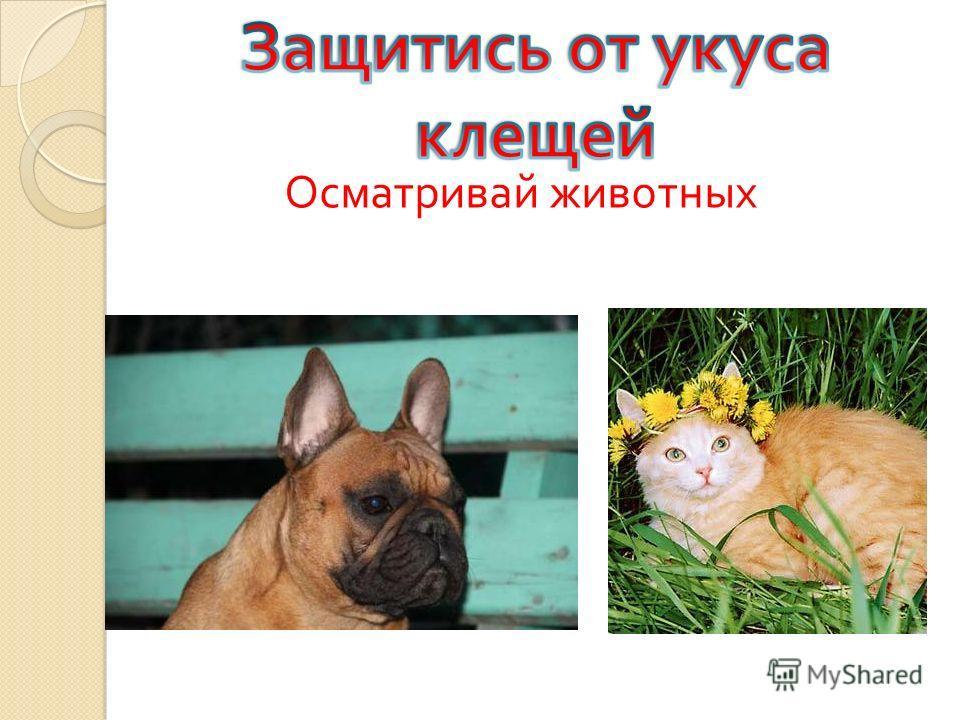 Осматривай животных