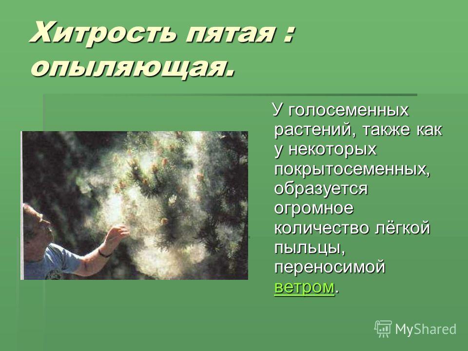 Хитрость пятая : опыляющая. У голосеменных растений, также как у некоторых покрытосеменных, образуется огромное количество лёгкой пыльцы, переносимой ветром. У голосеменных растений, также как у некоторых покрытосеменных, образуется огромное количест